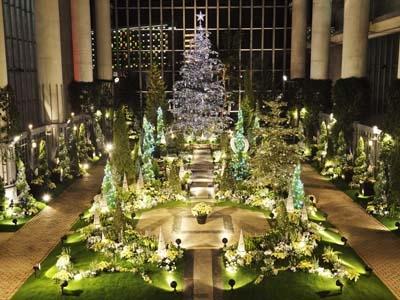 奇跡の星の植物館『クリスマスフラワーショー2019』